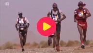 karrewiet: woestijnmarathon