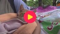 huisdieren opgevangen