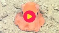 Schattige octopus