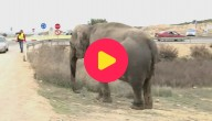 olifanten gekanteld