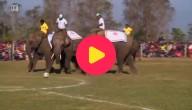 olifantenwedstrijd