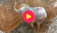Olifant gered