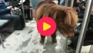 metro-pony