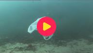 meer afval in de zee dan vis