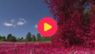 paarse natuur