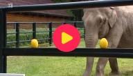 EK olifant