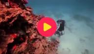 onderwaterballet