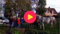 Paardenadoptie