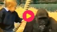 Gorillavriend