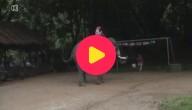 Olifantenvoetbal
