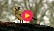 lego vogel