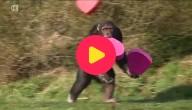 Valentijn in de zoo