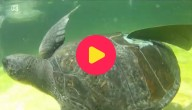 De gewonde schildpad