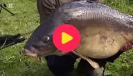Een dikke vis gevangen!