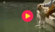 Leeuwenwelpje