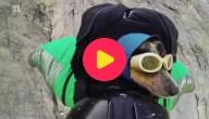 Whisper, de basejumpende hond
