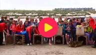 zeehonden vrij