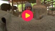 Slaapwel olifant