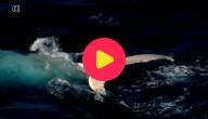 Witte walvis gespot