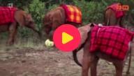 Voetballende olifantjes