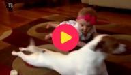 Hond leert baby kruipen
