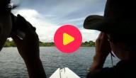 dolfijnen zoeken