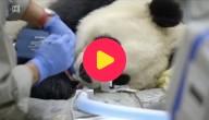 panda tandarts