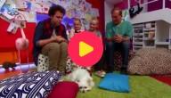Werelddierendag: de dierenarts weet raad - deel 4