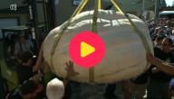 Pompoen van bijna één ton