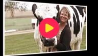 Grootste koe geeft fotoshoot