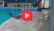 dolfijn en kleuter spelen met een bal