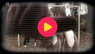Supportersgeweld Webcam 3
