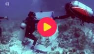 onder water leven