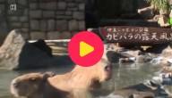 Waterzwijntjes genieten van warm bad
