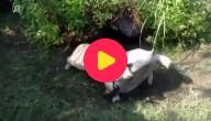 Sterke schildpad redt zijn vriend