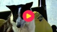hond rijdt met tractor