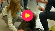 Leren omgaan met honden