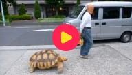 huisdierschildpad