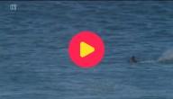 haai doet surfer schrikken