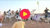 kamelenrace