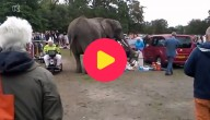 olifant ontsnapt uit circus