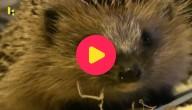egels verzorgen