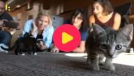 Kittens huren