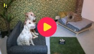 Hondenhotel Kaapstad