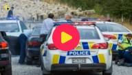 Schapen helpen politie