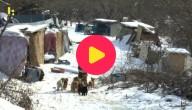 Hondenasiel Zuid-Korea