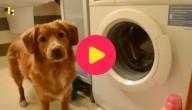 Hond doet de was