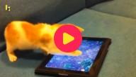 Kat speelt op iPad