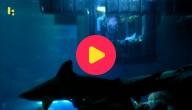 Slapen tussen de haaien