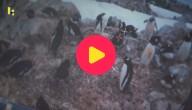 pinguins tellen